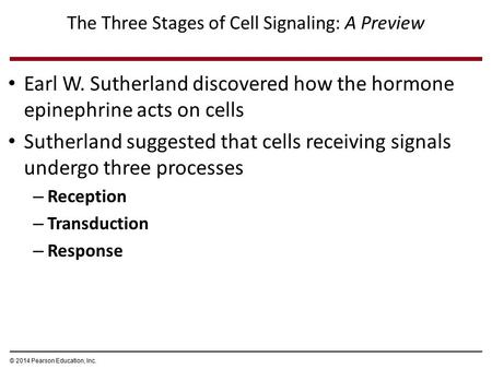 The Three Stages of Cell Signaling: A Preview Earl W. Sutherland discovered how the hormone epinephrine acts on cells Sutherland suggested that cells receiving.