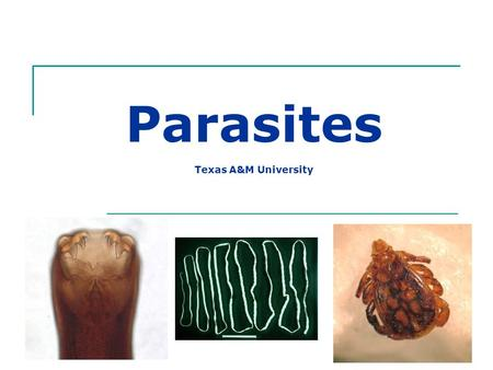 Parasites Texas A&M University. What is a Parasite? Organism that lives within or upon a different host species and may cause harm to the host.