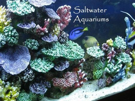 Saltwater Aquariums. The essential items for your tank.