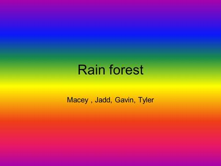 Rain forest Macey, Jadd, Gavin, Tyler Description of Rain Forest There are three main levels they are the ground layer, the under story, and the canopy.