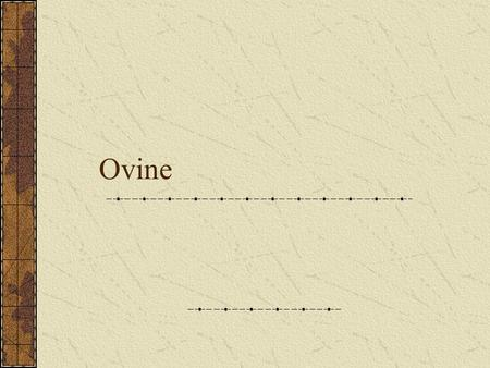 Ovine. Ovine – Three Types Lamb, Yearling, Mutton Lamb- Must be 1 year old or less Can be determined by… Fell- Thin waxy film on flesh Break joint muscle.