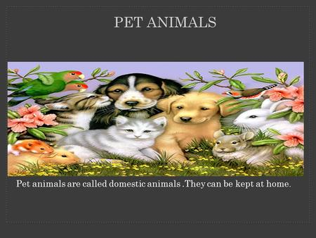 PET ANIMALS Pet animals are called domestic animals.They can be kept at home.