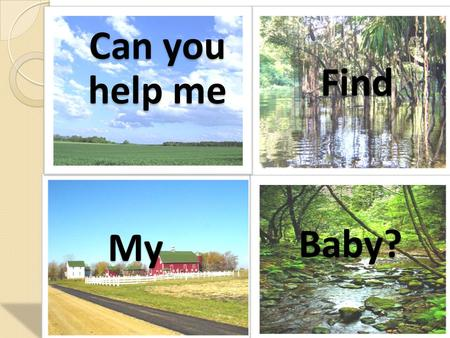Can you help me Find My Baby?. A mother horse gallops with her…