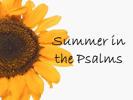 Summer in the Psalms. Psalm 4 For the director of music. With stringed instruments. A psalm of David.