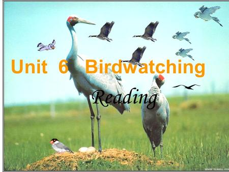 Unit 6 Birdwatching Reading. Swallow 燕子 Golden-eagle 金雕 crown 乌鸦 Woodpecker 啄木鸟 Pica pica 喜鹊.