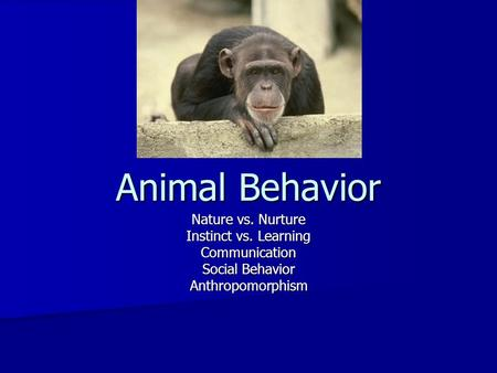 Animal Behavior Nature vs. Nurture Instinct vs. Learning Communication Social Behavior Anthropomorphism.