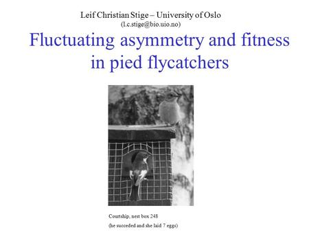 Fluctuating asymmetry and fitness in pied flycatchers Leif Christian Stige – University of Oslo Courtship, nest box 248 (he succeded.