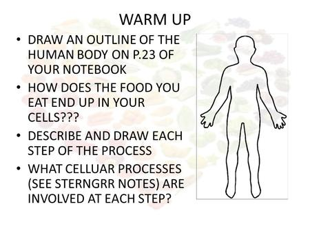 WARM UP DRAW AN OUTLINE OF THE HUMAN BODY ON P.23 OF YOUR NOTEBOOK HOW DOES THE FOOD YOU EAT END UP IN YOUR CELLS??? DESCRIBE AND DRAW EACH STEP OF THE.
