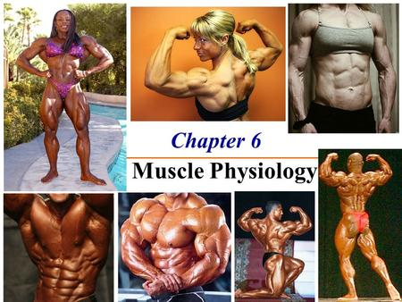 Chapter 6 The Muscle Physiology