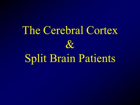 The Cerebral Cortex & Split Brain Patients. Corpus Callosum Major ( but not only) pathway between sides Connects comparable structures on each side Permits.