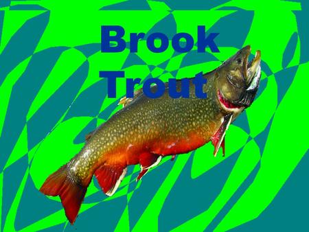 Brook Trout Brook Trout Brook Trout. Program Description First stage: eggs Second stage: Little fry Third stage: finger links Last Stage: Big fishies.