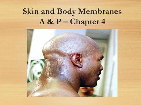 Skin and Body Membranes A & P – Chapter 4. Integumentary System Skin (cutaneous membrane) Skin derivatives Sweat glands Oil glands Hairs Nails.