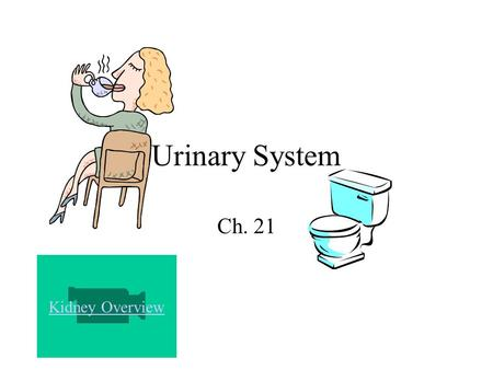 Urinary System Ch. 21 Kidney Overview. Parts of the Urinary System 2 Kidneys 2 Ureters Urinary Bladder Urethra.
