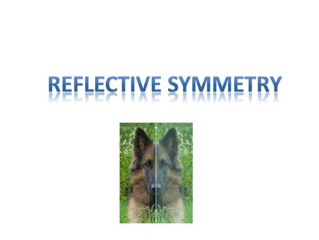 An image has Reflective Symmetry if there is at least one line which splits the image in half so that one side is the mirror image of the other.