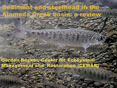 Sediment and steelhead in the Alameda Creek basin: a review Gordon Becker, Center for Ecosystem Management and Restoration (CEMAR)