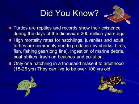 Did You Know? Turtles are reptiles and records show their existence during the days of the dinosaurs 200 million years ago High mortality rates for hatchlings,