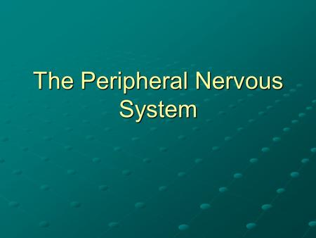 The Peripheral Nervous System. Peripheral Nervous System 31 pairs of spinal nerves 12 pairs of cranial nerves All of the smaller nerves that branch from.