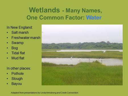 Wetlands - Many Names, One Common Factor: Water In New England: Salt marsh Freshwater marsh Swamp Bog Tidal flat Mud flat In other places: Pothole Slough.