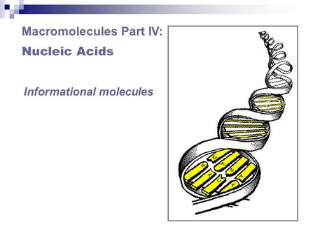 Macromolecules Part IV: Nucleic Acids Informational molecules.