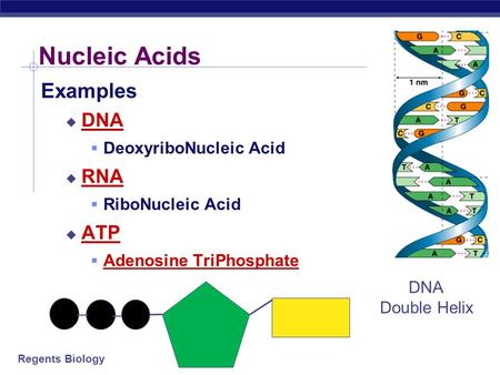Nucleic Acids Examples DNA RNA ATP DeoxyriboNucleic Acid