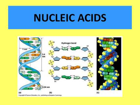nucleic acid molecule powerpoint