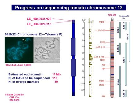 Progress on sequencing tomato chromosome 12 045N22 (Chromosome 12—Telomere P) Stack Lab--April 8,2005 LE_HBa0045N22 LE_HBa0026C13 Estimated euchromatin.