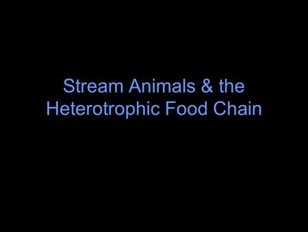 Stream Animals & the Heterotrophic Food Chain Processing of Organic Matter In fall, leaf debris from overhanging deciduous trees accumulates in the stream.
