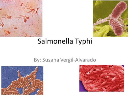 Salmonella Typhi By: Susana Vergil-Alvarado. Shape and Arrangement Shape: Rod Flagellated and motile Non-spore forming.