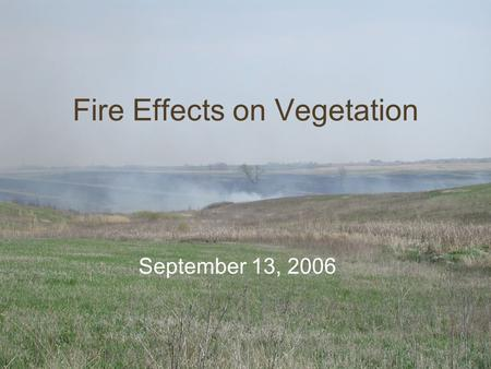 Fire Effects on Vegetation September 13, 2006. Tallgrass Prairie: TTYP First, think to yourself. Write down any causes, effects, and mechanisms that explain.