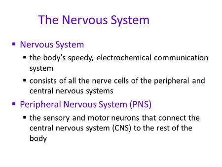 The Nervous System  Nervous System  the body ' s speedy, electrochemical communication system  consists of all the nerve cells of the peripheral and.
