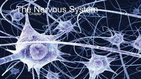 The Nervous <strong>System</strong> Chapter 7. Functions of the Nervous <strong>System</strong> Master controlling <strong>and</strong> communicating <strong>system</strong> of the body Maintains body homeostasis with.