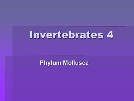 "Invertebrates 4 Phylum Mollusca. Phylum Mollusca: The ""soft-bodied"" animals."