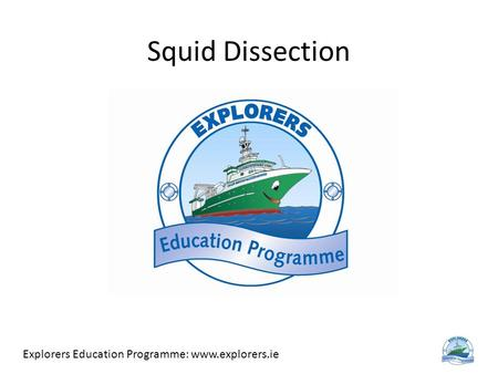 Squid Dissection Explorers Education Programme: www.explorers.ie.