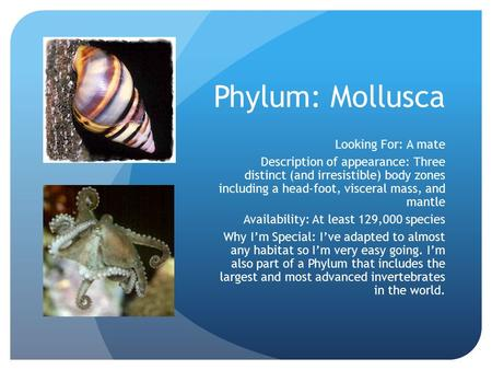 Phylum: Mollusca Looking For: A mate Description of appearance: Three distinct (and irresistible) body zones including a head-foot, visceral mass, and.