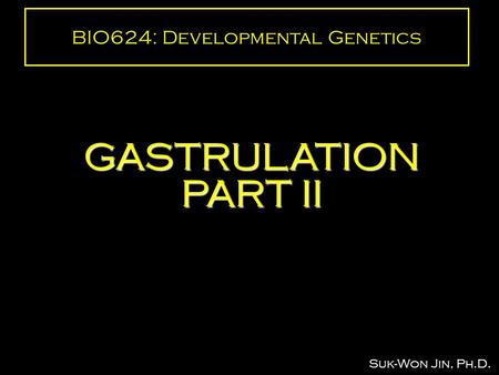 BIO624: Developmental Genetics GASTRULATION PART II Suk-Won Jin, Ph.D.