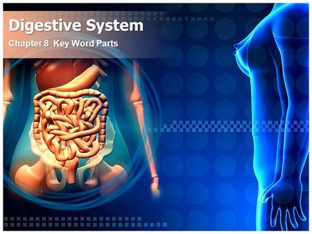 Digestive System Chapter 8 Key Word Parts. An/o Ring Having to do with the Anus Anus – The lower opening of the digestive tract. – The flow of waste through.