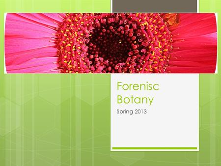 Forenisc Botany Spring 2013. Forensic Palynology  The use of pollen and spore evidence to help solve criminal cases.