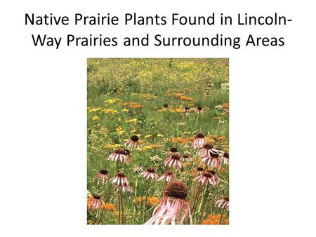 Native Prairie Plants Found in Lincoln- Way Prairies and Surrounding Areas.