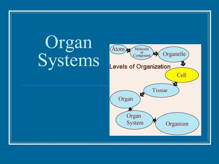 Organ Systems. Organization Individual body units: cells Similar cells work together as: tissues 4 main types of tissue: Epithelial, connective, muscle,