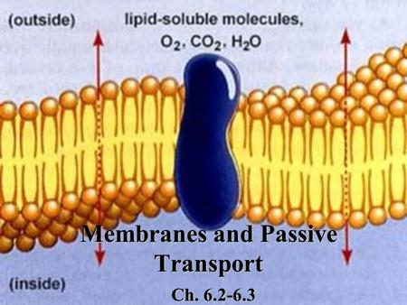 Membranes and Passive Transport Ch. 6.2-6.3. Review Cell membranes are made up of some type of lipid What is unique about the interaction of lipids and.