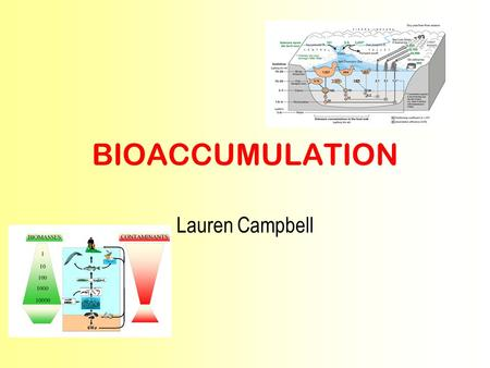 BIOACCUMULATION Lauren Campbell. What Is Bioaccumulation? Bioaccumulation is the build up of a biological substance in organisms. This can happen at any.
