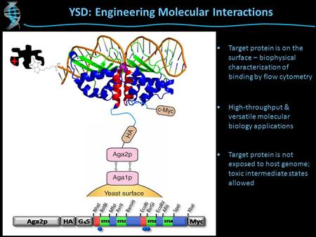 YSD: Engineering Molecular Interactions Target protein is on the surface – biophysical characterization of binding by flow cytometry High-throughput &