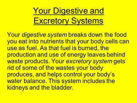 Your Digestive and Excretory Systems Your digestive system breaks down the food you eat into nutrients that your body cells can use as fuel. As that fuel.
