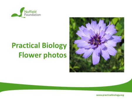 Practical Biology Flower photos www.practicalbiology.org.