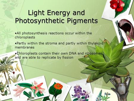 Light Energy and Photosynthetic Pigments
