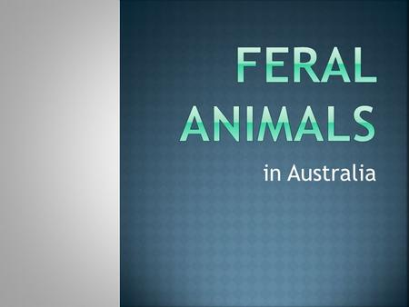 In Australia. Feral animals are animals which have been introduced to an area where they do not occur naturally and which have become wild.