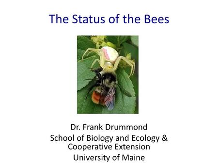 The Status of the Bees Dr. Frank Drummond School of Biology and Ecology & Cooperative Extension University of Maine.