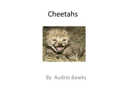 Cheetahs By Audrie Bawks. Body These are some things about the cheetah's body. The cheetah's foot has vary sharp claws. It's feet can jump 25 feet forward.