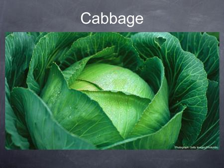 Cabbage Photograph: Getty Images/PhotoAlto. Cabbage seeds are TINY! But a head of cabbage can grow to be HUGE. Big or small, cabbage packs a nutritional.