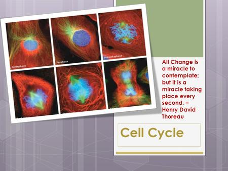 Cell Cycle All Change is a miracle to contemplate; but it is a miracle taking place every second. – Henry David Thoreau.